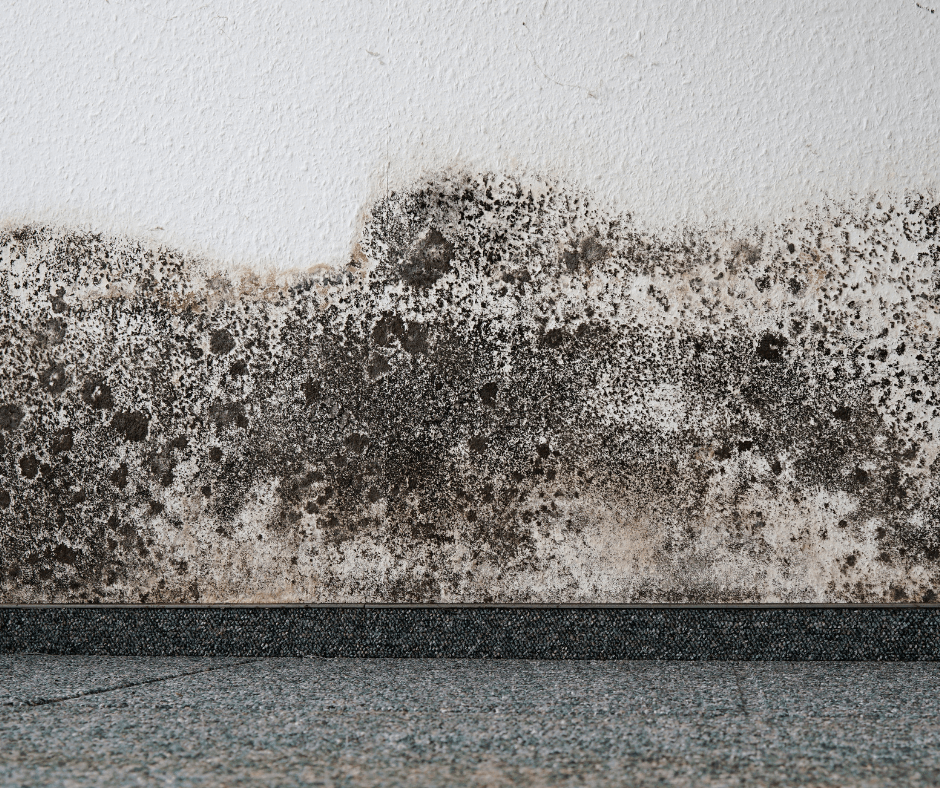 Mould on the Wall